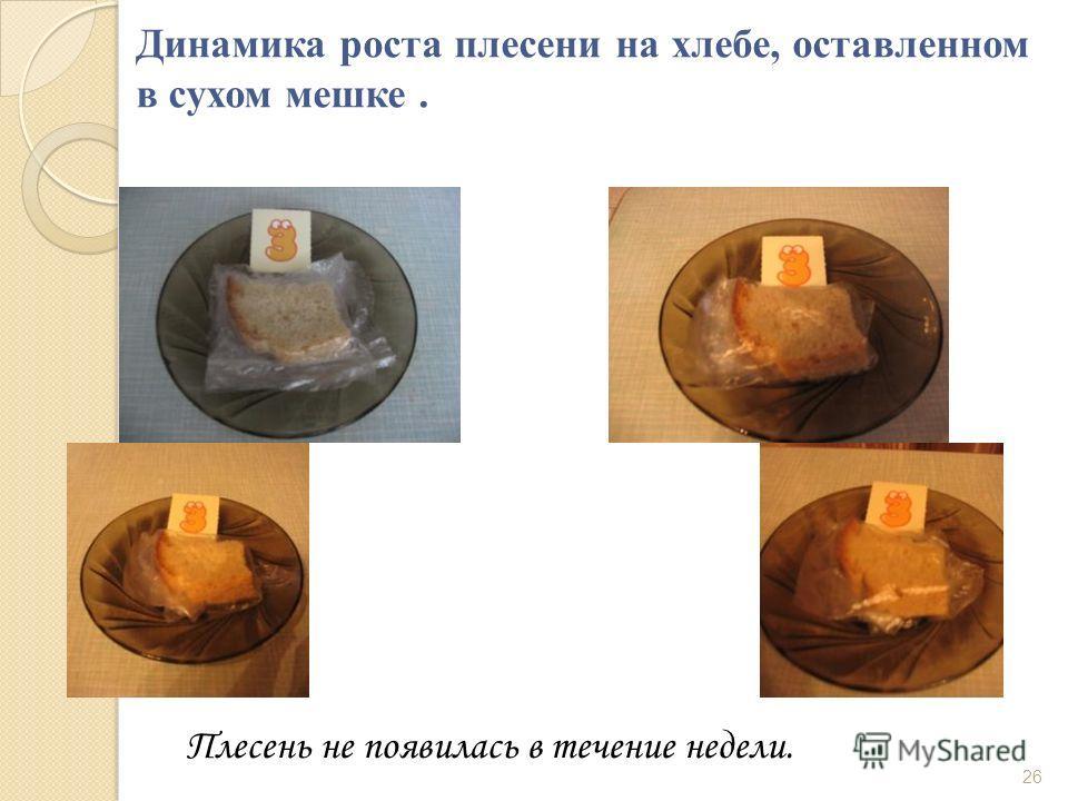 Динамика роста плесени на хлебе, оставленном в сухом мешке. Плесень не появилась в течение недели. 26