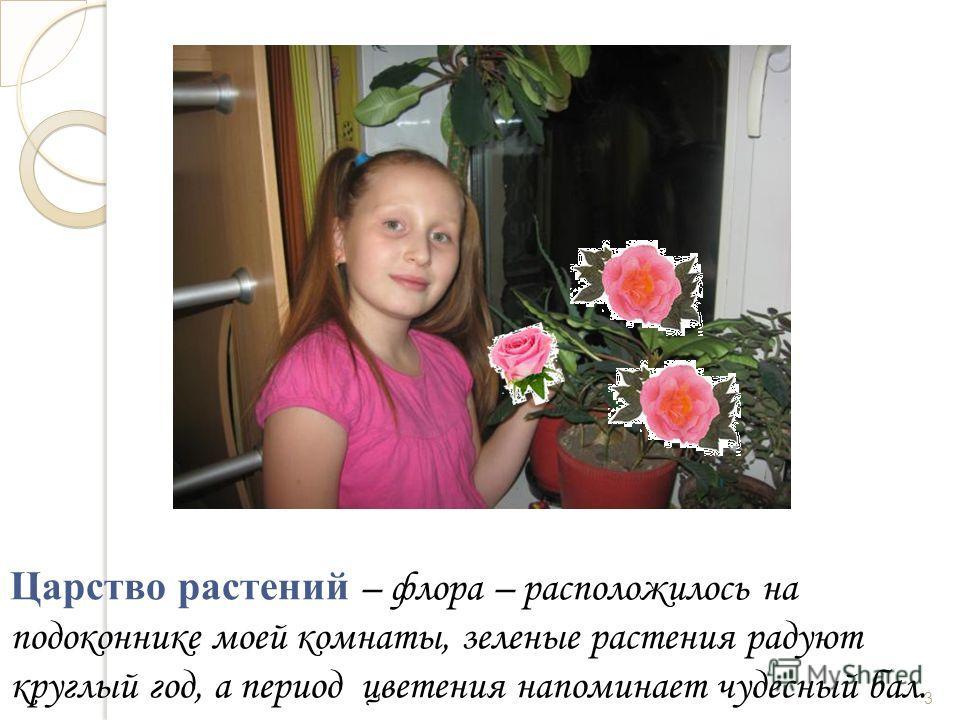 Царство растений – флора – расположилось на подоконнике моей комнаты, зеленые растения радуют круглый год, а период цветения напоминает чудесный бал. 3