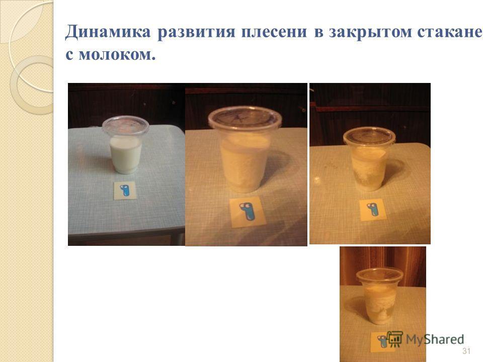 Динамика развития плесени в закрытом стакане с молоком. 31