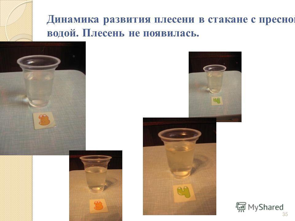 Динамика развития плесени в стакане с пресной водой. Плесень не появилась. 35