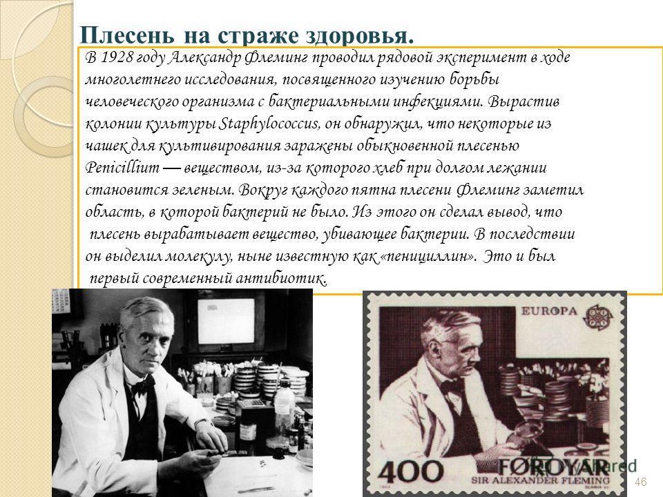 Плесень на страже здоровья. В 1928 году Александр Флеминг проводил рядовой эксперимент в ходе многолетнего исследования, посвященного изучению борьбы человеческого организма с бактериальными инфекциями. Вырастив колонии культуры Staphylococcus, он об