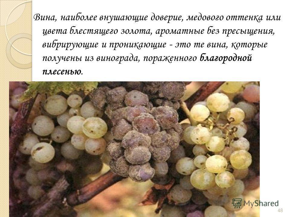 Вина, наиболее внушающие доверие, медового оттенка или цвета блестящего золота, ароматные без пресыщения, вибрирующие и проникающие - это те вина, которые получены из винограда, пораженного благородной плесенью. 48