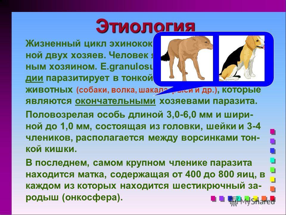 3 Этиология Жизненный цикл эхинококка совершается со сме- ной двух хозяев. Человек является промежуточ- ным хозяином. E.granulosus в половозрелой ста- дии паразитирует в тонкой кишке плотоядных животных (собаки, волка, шакала, рыси и др.), которые яв