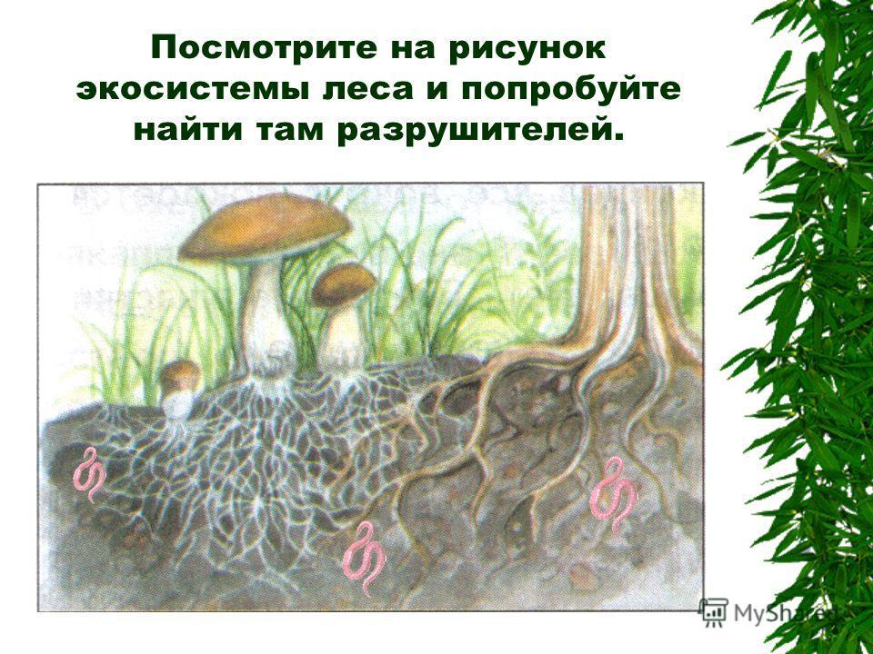 Посмотрите на рисунок экосистемы леса и попробуйте найти там разрушителей.