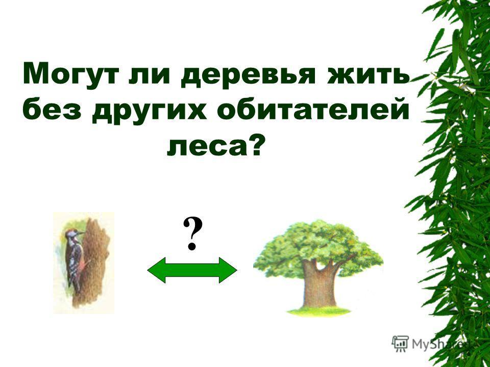 Могут ли деревья жить без других обитателей леса? ?