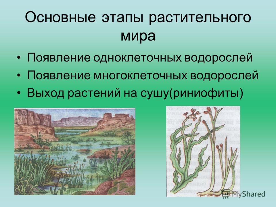 Основные этапы растительного мира Появление одноклеточных водорослей Появление многоклеточных водорослей Выход растений на сушу(риниофиты)