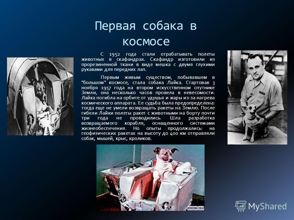 Первая собака в космосе С 1952 года стали отрабатывать полеты животных в скафандрах. Скафандр изготовили из прорезиненной ткани в виде мешка с двумя глухими рукавами для передних лап. Первым живым существом, побывавшем в