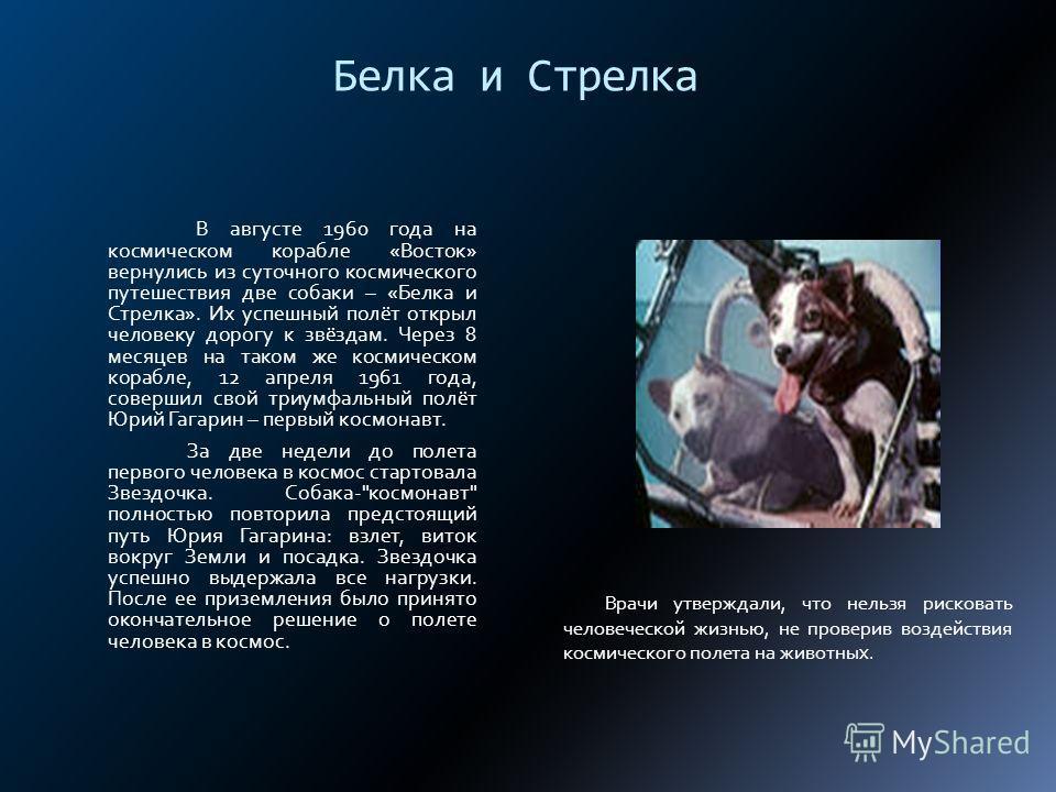 Белка и Стрелка В августе 1960 года на космическом корабле «Восток» вернулись из суточного космического путешествия две собаки – «Белка и Стрелка». Их успешный полёт открыл человеку дорогу к звёздам. Через 8 месяцев на таком же космическом корабле, 1