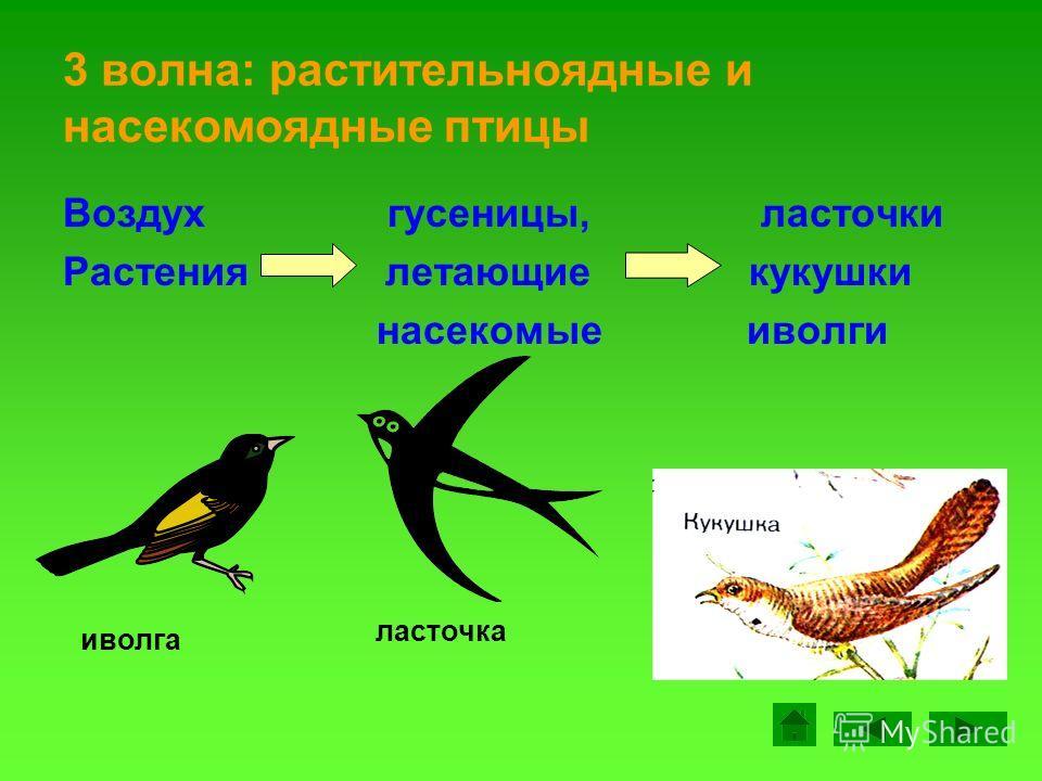 2 волна: водоплавающие птицы Оттаяли «водные» гуси водоёмы жители утки гусь утка