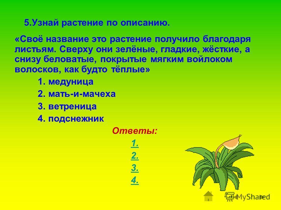 4. Какое дерево относится к первоцветам? 1. ель 2. липа 3. ива Ответы: 1. 2. 3.
