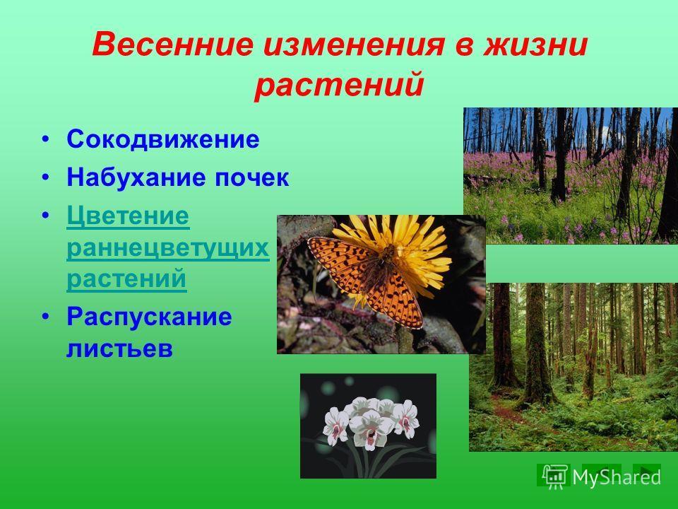 Изменения в неживой природе Солнце выше Д > Н t воздуха выше 0º Потепление Оттаивание земли и водоемов Ледоход, половодье Изменение осадков (дождь)