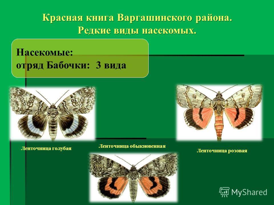 Насекомые: отряд Бабочки: 3 вида Красная книга Варгашинского района. Редкие виды насекомых. Ленточница голубая Ленточница обыкновенная Ленточница розовая