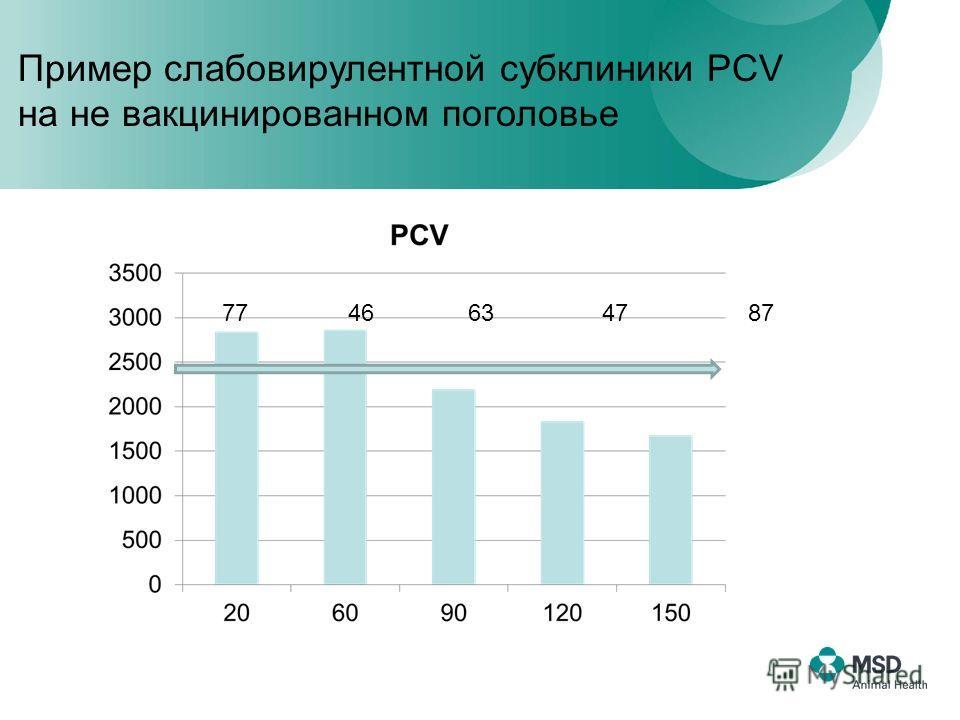 77 46 63 47 87 Пример слабовирулентной субклиники PCV на не вакцинированном поголовье