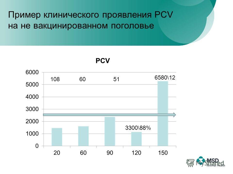 6580\12 3300\88% 108 60 51 Пример клинического проявления PCV на не вакцинированном поголовье