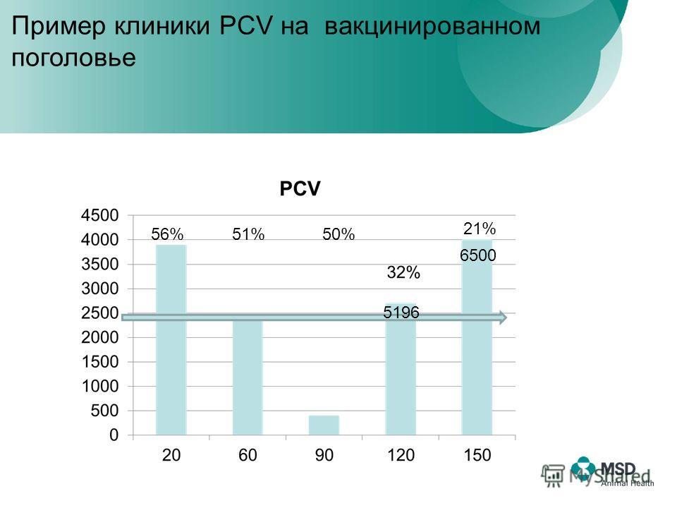 6500 21% 5196 56% 51% 50% Пример клиники PCV на вакцинированном поголовье