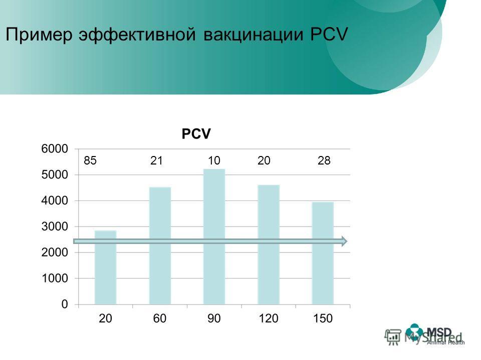 85 21 10 20 28 Пример эффективной вакцинации PCV