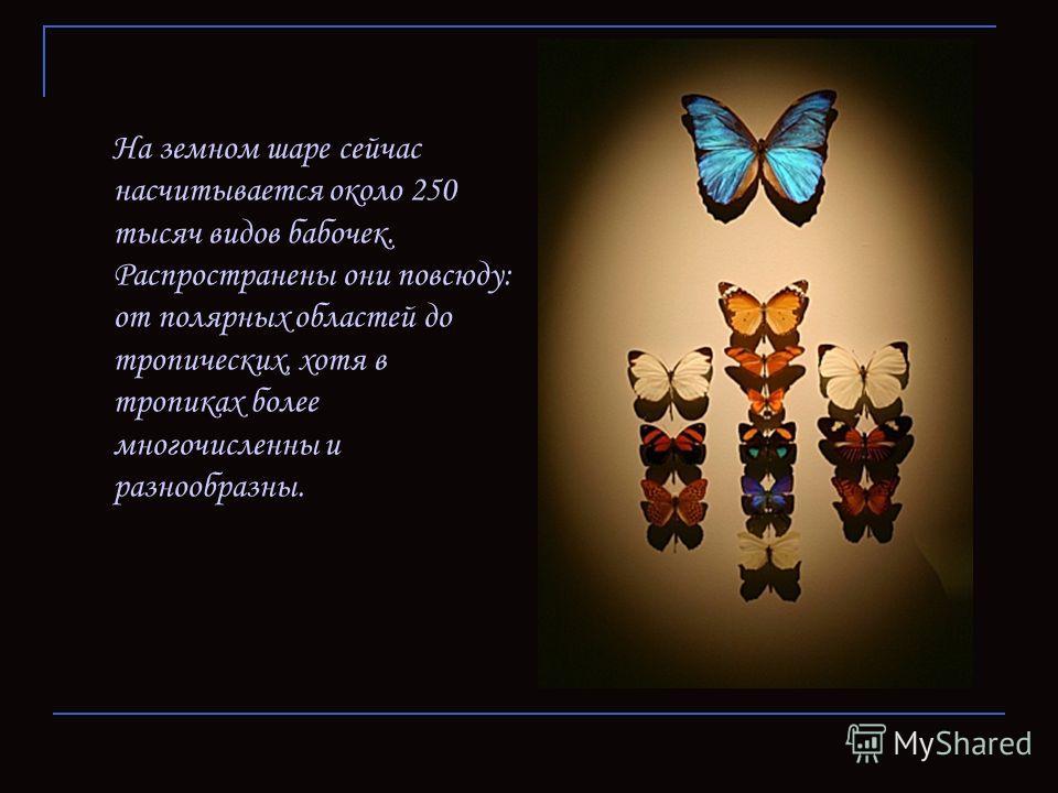На земном шаре сейчас насчитывается около 250 тысяч видов бабочек. Распространены они повсюду: от полярных областей до тропических, хотя в тропиках более многочисленны и разнообразны.