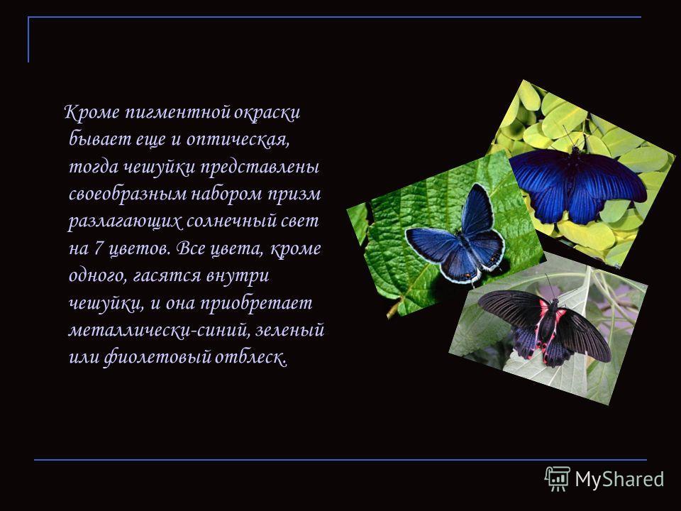Кроме пигментной окраски бывает еще и оптическая, тогда чешуйки представлены своеобразным набором призм разлагающих солнечный свет на 7 цветов. Все цвета, кроме одного, гасятся внутри чешуйки, и она приобретает металлически-синий, зеленый или фиолето