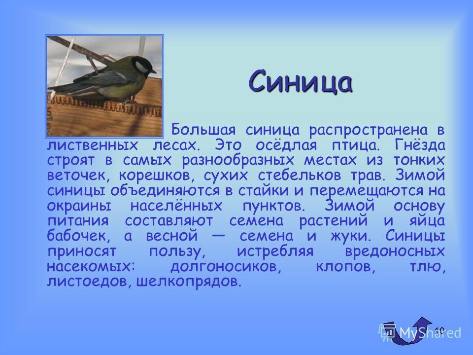 9 Сорока Сорока оседлая птица. Зиму проводит вблизи поселений человека, питаясь отбросами. Питается насекомыми, грызунами, птенцами, яйцами, зёрнами культурных злаков. Живет эта птица парами. Гнездо строит в густых ветвях куста или дерева. Разоряя гн