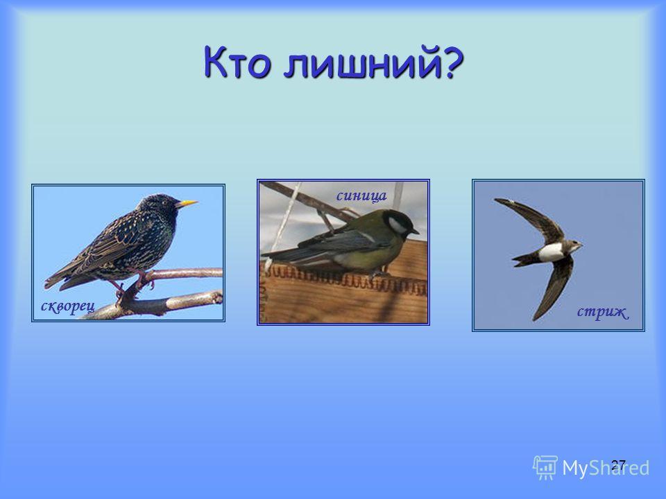 26 Кто из них быстрее летает?