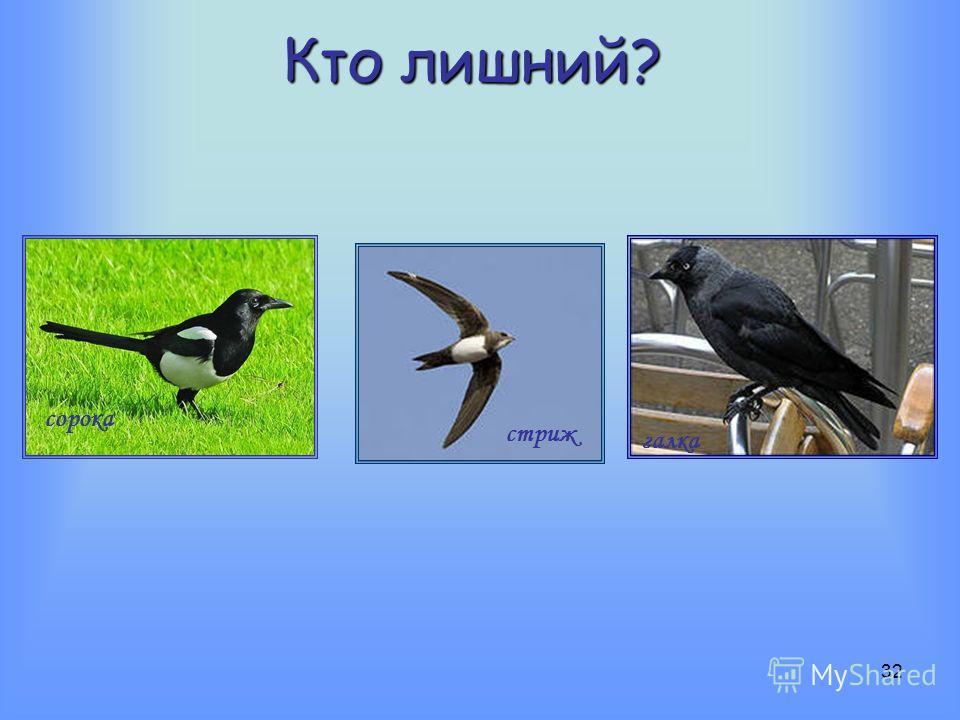 31 Кто ворона?