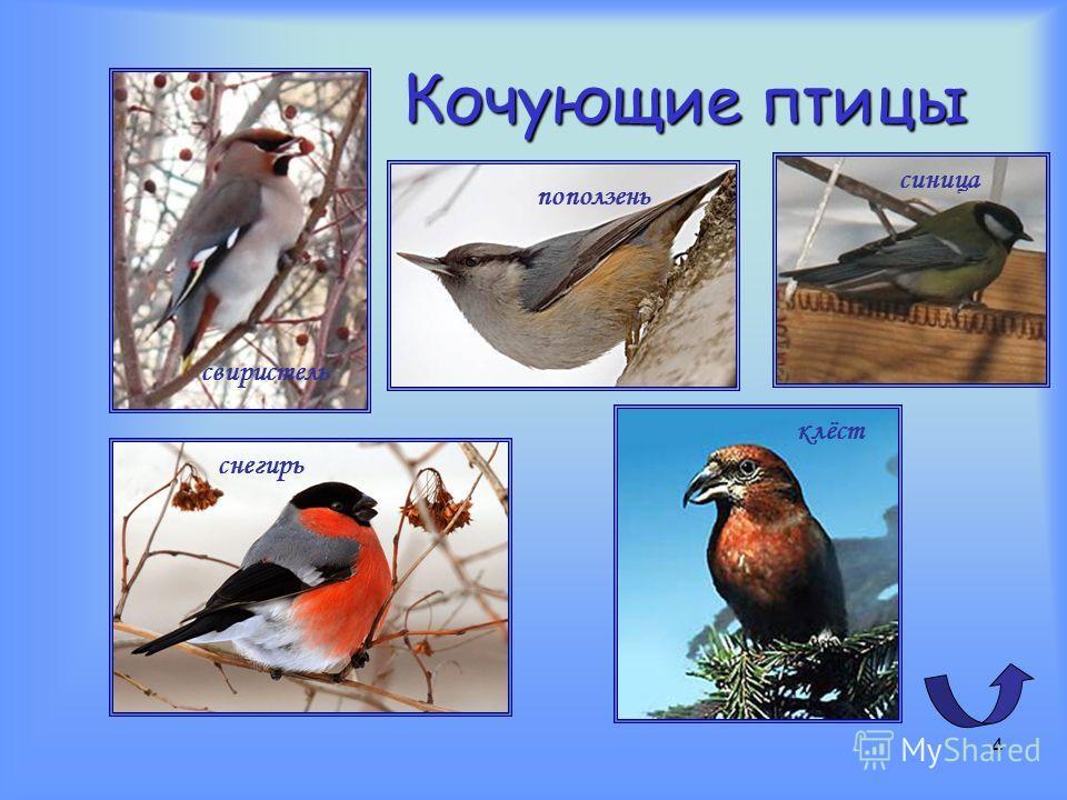 3 Перелётные птицы соловей стриж утка кукушка скворец ласточка