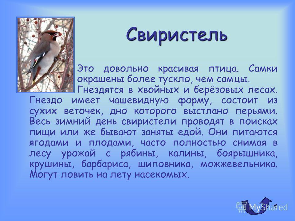 5 Оседлые птицы голубь сорока ворона воробей дятел галка
