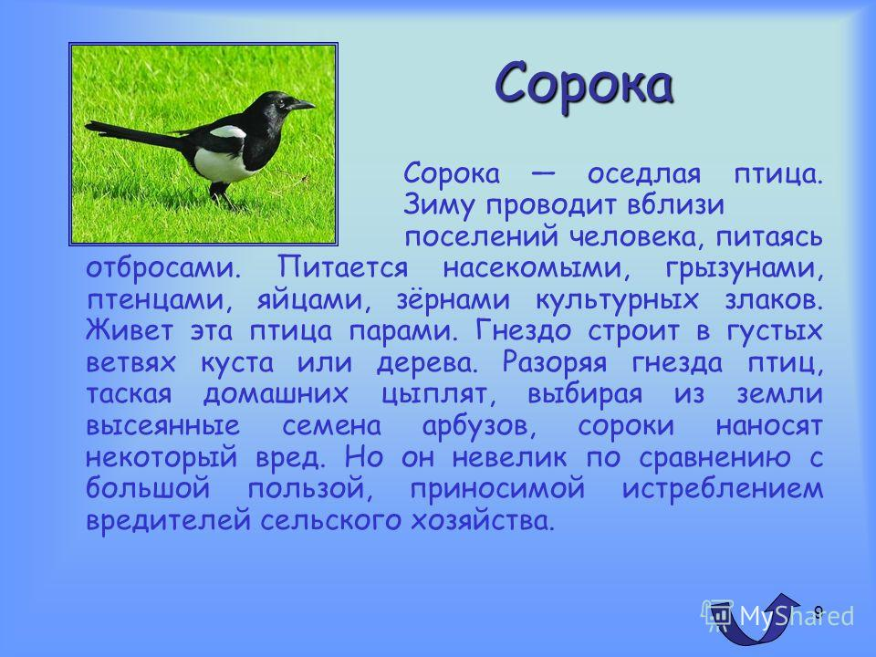8 Воробей Воробей домовый одна из наиболее широко известных птиц, живущих по соседству с человеком. Это осёдлая птица. Гнездится воробей отдельными парами. Гнезда помещает в самых разнообразных местах: в норах, в дуплах, в скворечниках, обычно это гр