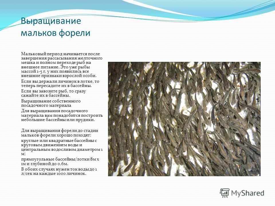 Выращивание мальков форели Мальковый период начинается после завершения рассасывания желточного мешка и полном переходе рыб на внешнее питание. Это уже рыбы массой 1-5 г, у них появились все внешние признаки взрослой особи. Если вы держали личинок в