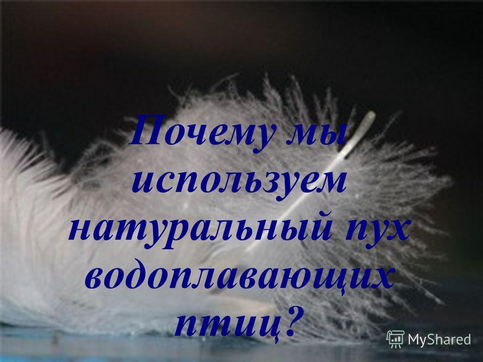 Почему мы используем натуральный пух водоплавающих птиц?