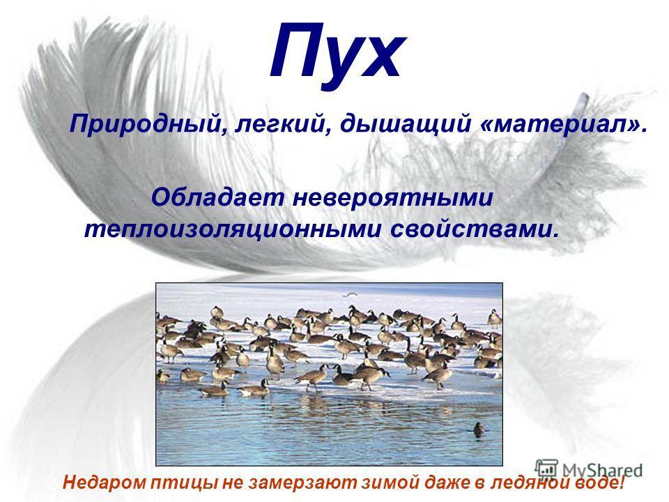 Пух Природный, легкий, дышащий «материал». Недаром птицы не замерзают зимой даже в ледяной воде! Обладает невероятными теплоизоляционными свойствами.
