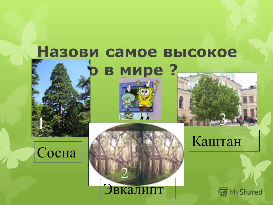 Назови конфетное дерево? 1 Зизифус 2 Эвкалипт 3 Дерево-корова
