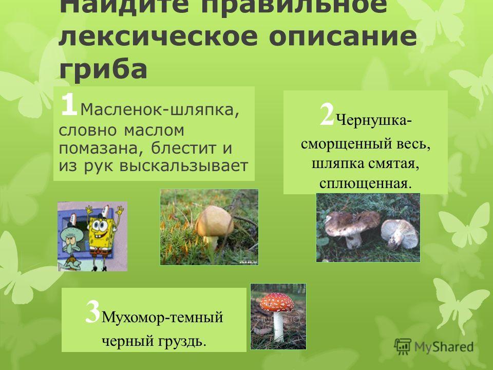 Какой гриб, растущий в наших лесах, является самым ядовитым? 1 Мухомор 2 Дождевик 3 Бледная поганка