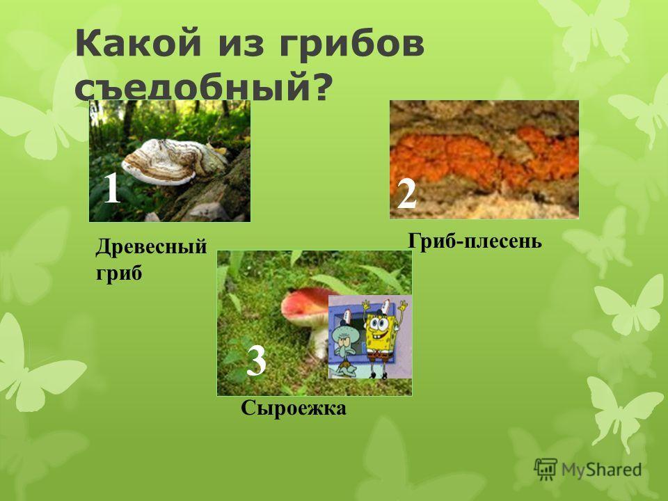 Найдите правильное лексическое описание гриба 1 Масленок-шляпка, словно маслом помазана, блестит и из рук выскальзывает 3 Мухомор-темный черный груздь. 2 Чернушка- сморщенный весь, шляпка смятая, сплющенная.