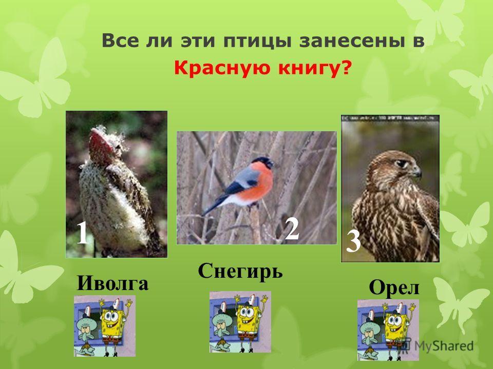 Какая птица благодаря скрещенному клюву может доставать семена из сосновых шишек? 1 2 3 Ремез Клёст Зяблик
