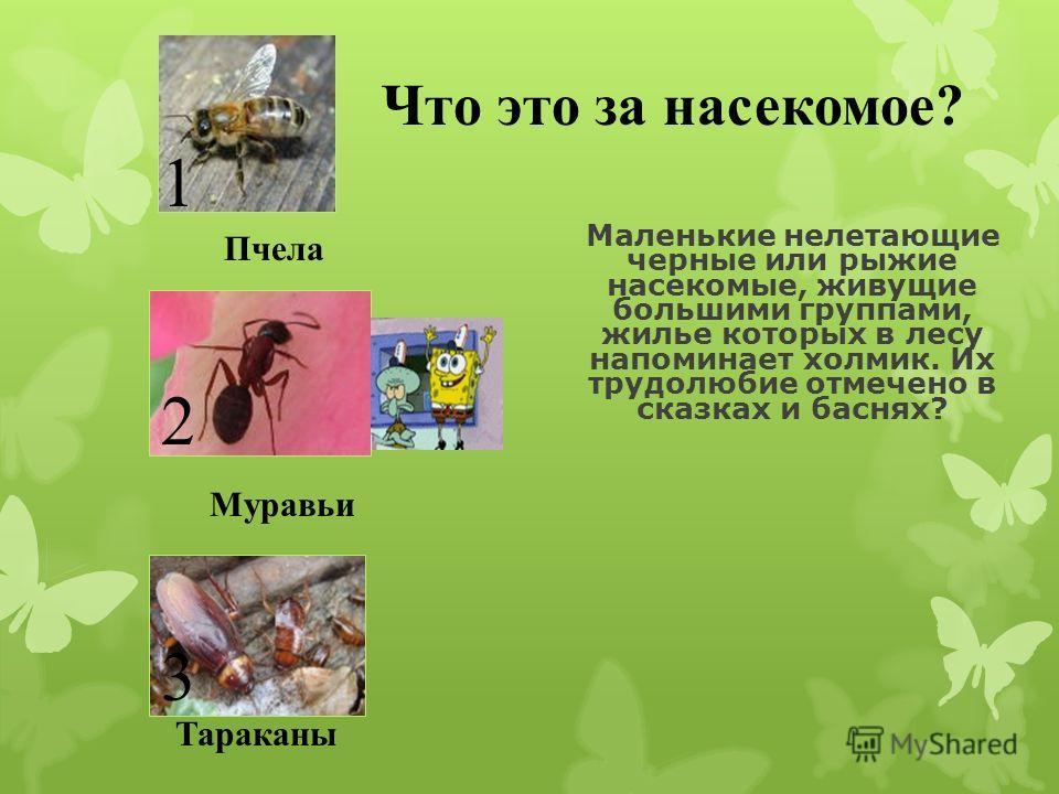 Комар 12 3 Муха Клещ Что это за насекомое? Мелкое летающее насекомое, самки которого питаются кровью. Имеет длинное тонкое жало. Его полет сопровождается высоким звенящим звуком?
