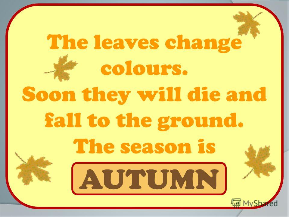 The leaves change colours. Soon they will die and fall to the ground. The season is … AUTUMN