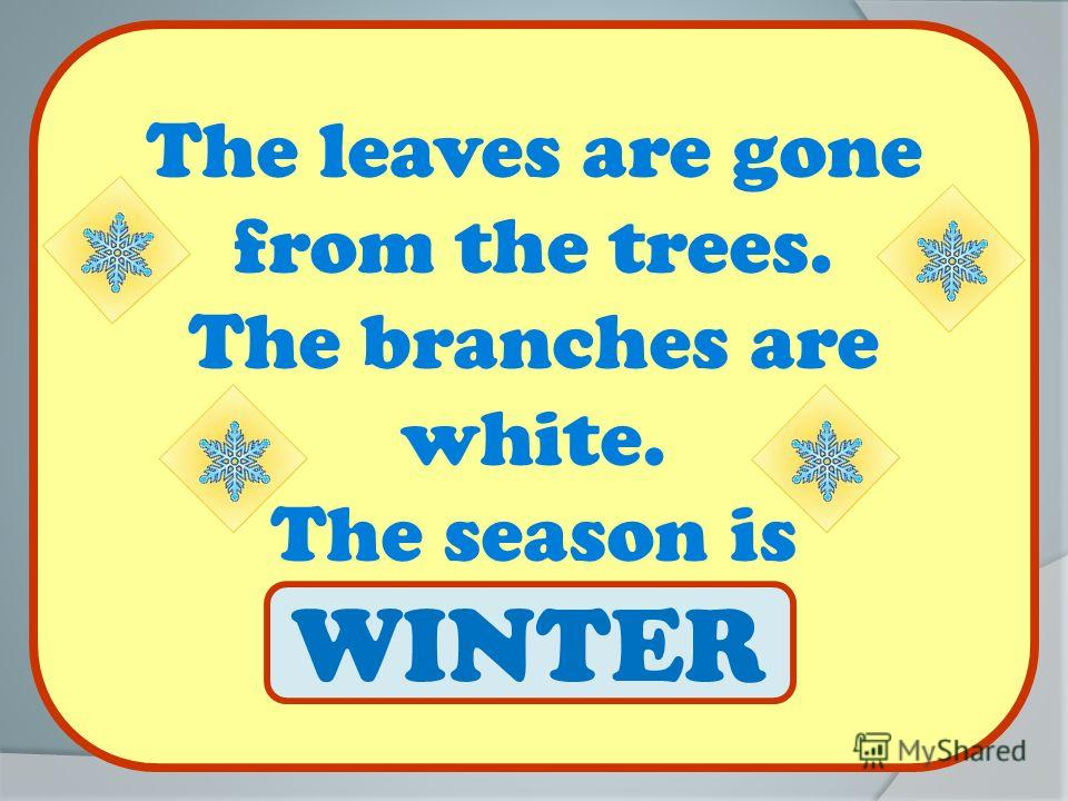 The leaves are gone from the trees. The branches are white. The season is … WINTER
