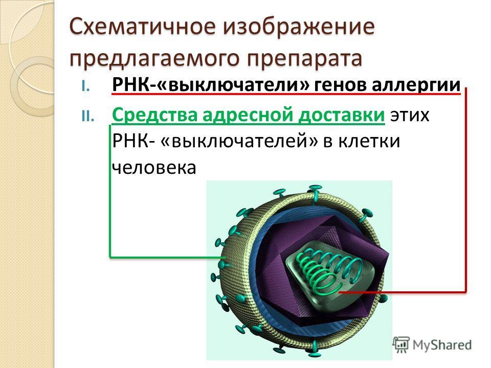 Схематичное изображение предлагаемого препарата I. РНК-«выключатели» генов аллергии II. Средства адресной доставки этих РНК- «выключателей» в клетки человека