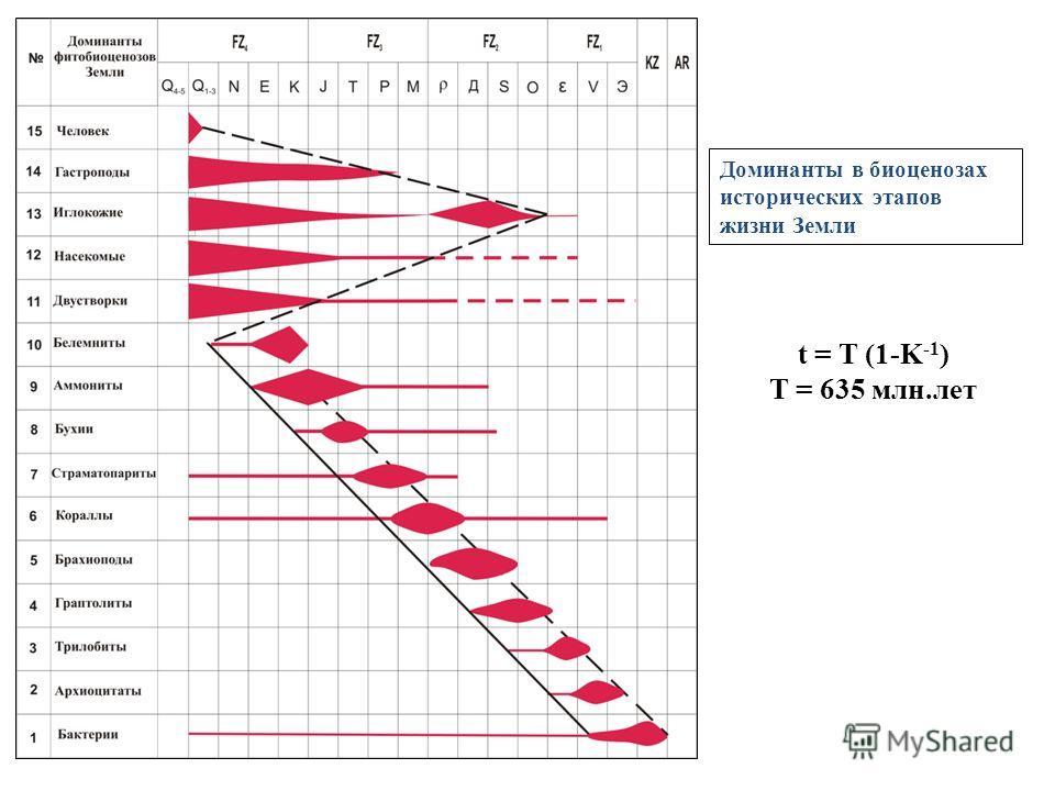 Доминанты в биоценозах исторических этапов жизни Земли t = T (1-K -1 ) T = 635 млн.лет