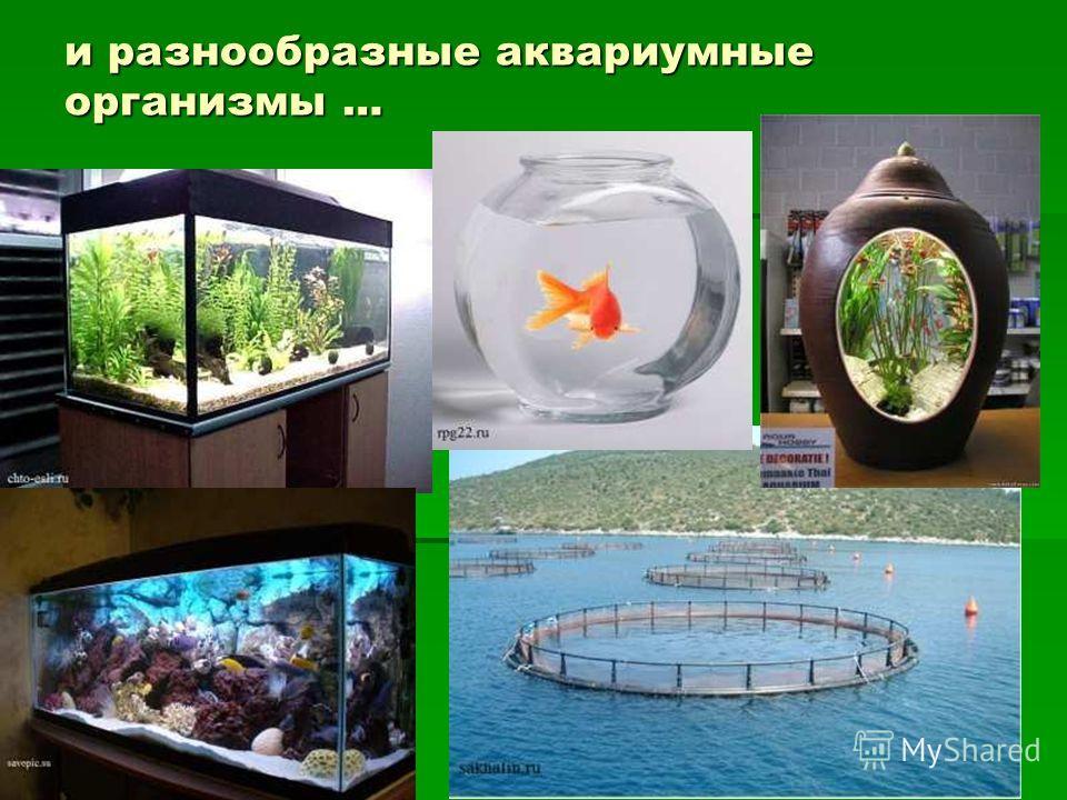 и разнообразные аквариумные организмы …