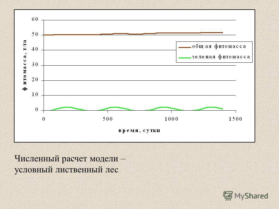 Численный расчет модели – условный лиственный лес