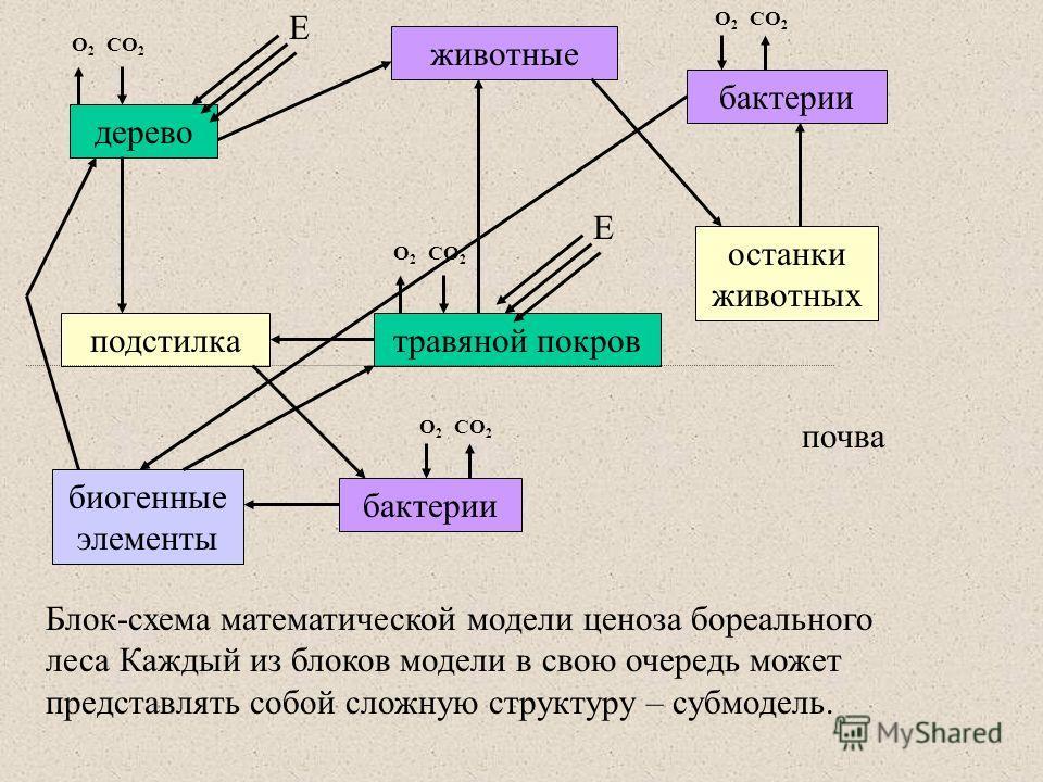 Блок-схема математической модели ценоза бореального леса Каждый из блоков модели в свою очередь может представлять собой сложную структуру – субмодель. O2O2 CO 2 O2O2 дерево бактерии животные травяной покровподстилка биогенные элементы Е Е останки жи