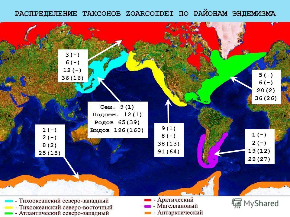 РАСПРЕДЕЛЕНИЕ ТАКСОНОВ ZOARCOIDEI ПО РАЙОНАМ ЭНДЕМИЗМА 3(-) 6(-) 12(-) 36(16) 1(-) 2(-) 8(2) 25(15) Сем. 9(1) Подсем. 12(1) Родов 65(39) Видов 196(160) 5(-) 6(-) 20(2) 36(26) 1(-) 2(-) 19(12) 29(27) 9(1) 8(-) 38(13) 91(64)