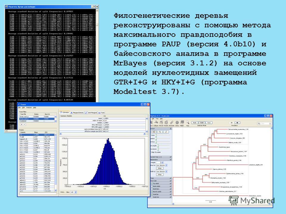 Филогенетические деревья реконструированы с помощью метода максимального правдоподобия в программе PAUP (версия 4.0b10) и байесовского анализа в программе MrBayes (версия 3.1.2) на основе моделей нуклеотидных замещений GTR+I+G и HKY+I+G (программа Mo
