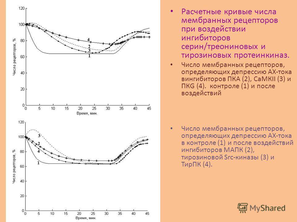 Расчетные кривые числа мембранных рецепторов при воздействии ингибиторов серин/треониновых и тирозиновых протеинкиназ. Число мембранных рецепторов, определяющих депрессию АХ-тока вингибиторов ПКА (2), СаМКII (3) и ПКG (4). контроле (1) и после воздей
