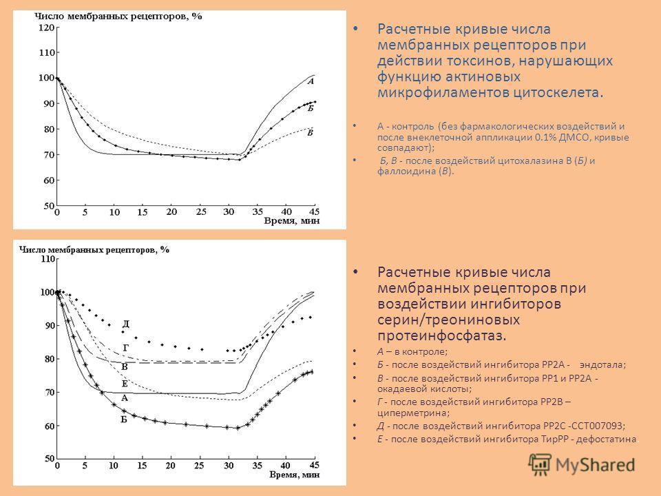 Расчетные кривые числа мембранных рецепторов при действии токсинов, нарушающих функцию актиновых микрофиламентов цитоскелета. А - контроль (без фармакологических воздействий и после внеклеточной аппликации 0.1% ДМСО, кривые совпадают); Б, В - после в