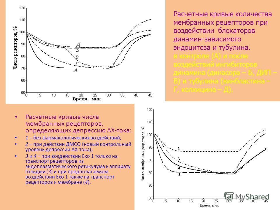 Расчетные кривые числа мембранных рецепторов, определяющих депрессию АХ-тока: 1 – без фармакологических воздействий; 2 – при действии ДМСО (новый контрольный уровень депрессии АХ-тока); 3 и 4 – при воздействии Ехо 1 только на транспорт рецепторов из