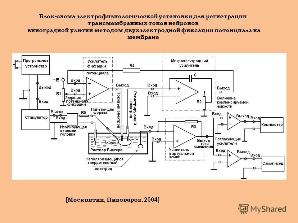 Блок - схема электрофизиологической установки для регистрации трансмембранных токов нейронов виноградной улитки методом двухэлектродной фиксации потенциала на мембране [ Москвитин, Пивоваров, 2004]