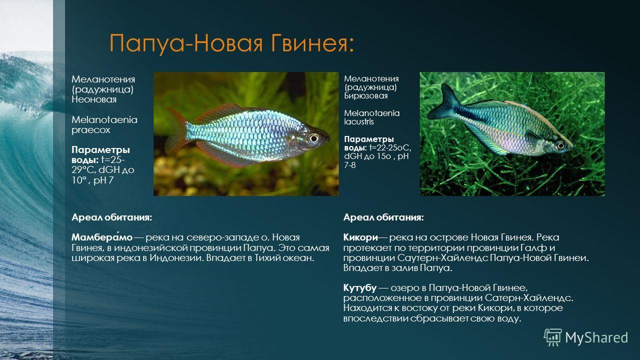 Папуа-Новая Гвинея: Меланотения (радужница) Неоновая Melanotaenia praecox Параметры воды: t=25- 29°С, dGH до 10°, рН 7 Меланотения (радужница) Бирюзовая Melanotaenia iacustris Параметры воды: t=22-25оС, dGH до 15о, рН 7-8 Ареал обитания: Мамберамо ре